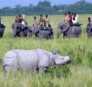 Assam Wildlife Packages
