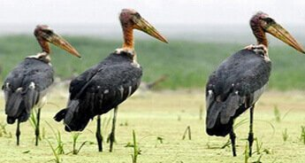 Birds of Assam and Eaglenest
