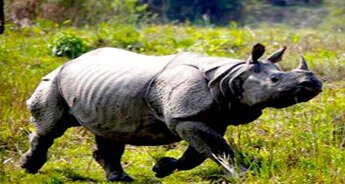 Kaziranga & Gibbon Wildlife Sanctuary Tour