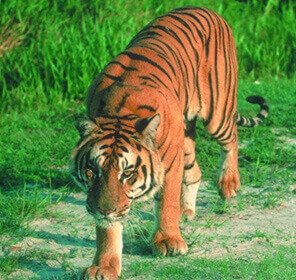 Nameri & Kaziranga Wildlife Tour