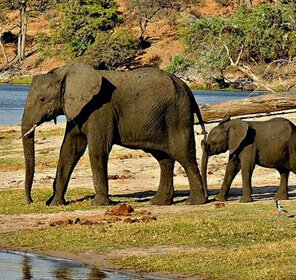 Best of North East India Wildlife Tour