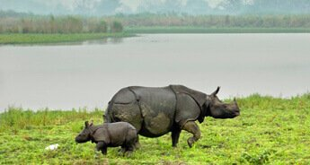Rhino with Best of North East India