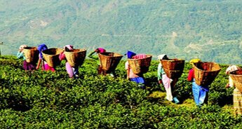 Tea Tasting Tour to Dibrugarh & Jorhat