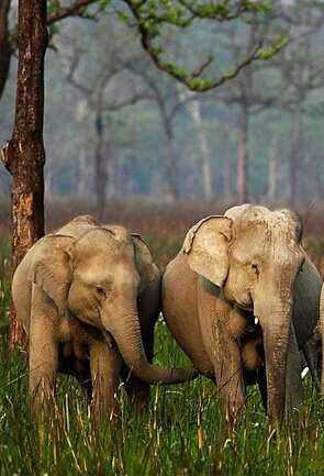 Wildlife in Assam