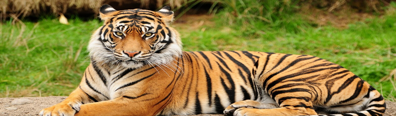 Classic India Wildlife Tour Package