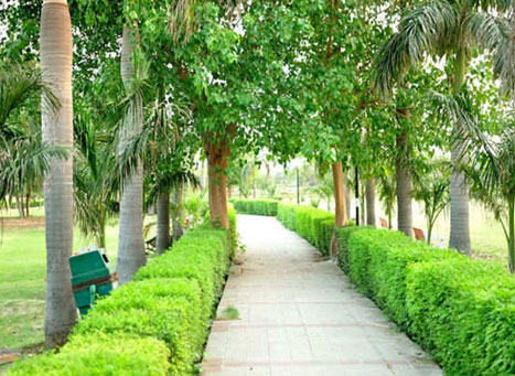 Japanese Park Rohini Delhi Spend Time Amid Nature At Japanese Park