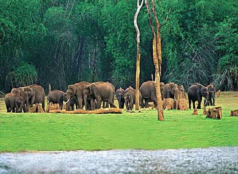 Chinnar Wildlife Sanctuary Munnar - An Eco-tourism Spot Kerala