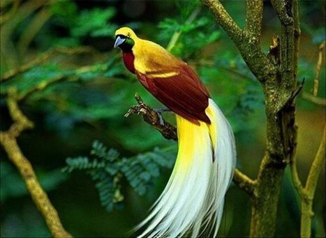 Thattekad Bird Sanctuary An Interesting Place For Birders