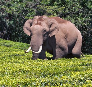 Kerala Wildlife Travel Packages