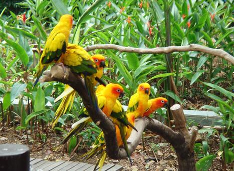 Kumarakom Bird Sanctuary Kerala Home To Peculiar Variances Of Birds