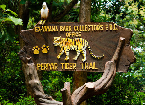 Periyar Tiger Trail Kerala Best Place To Experience
