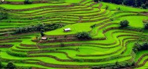 Phek, Nagaland