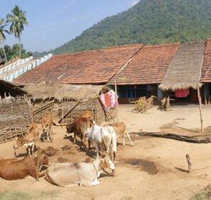 Popular Tribes of Odisha - Tribal Culture in Odisha | Odisha