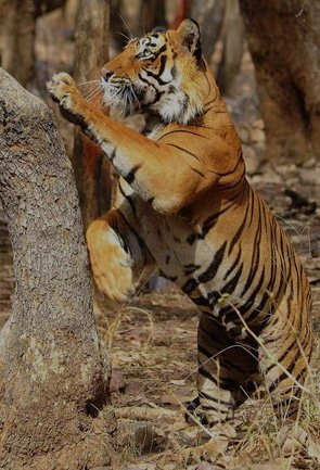 rajasthan_wildlife