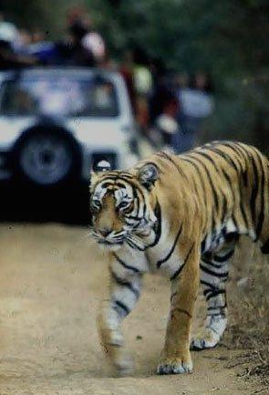 Uttarakhand Wildlife