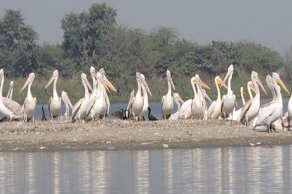 Image result for sur sarovar bird sanctuary agra
